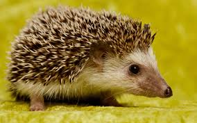 ������ Hedgehog - ��� � ������� �� ������