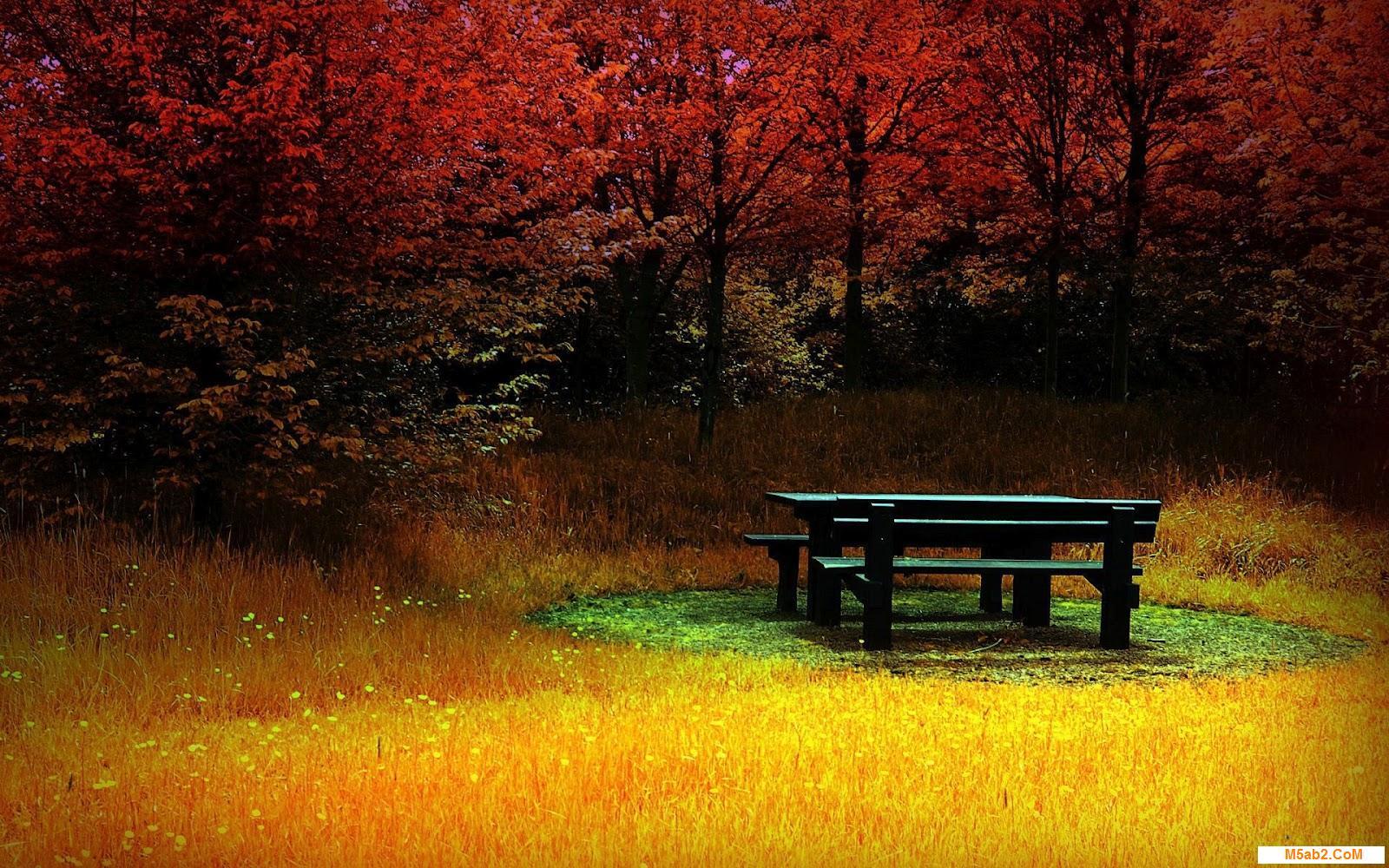 Nature Wallpaper HD