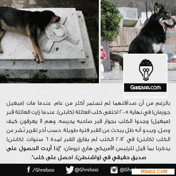 قصة وفاء  كابتن كلب العائلة - قصة حقيقة