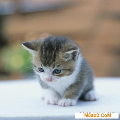 صور قطط مضحكة 2018 - اجمل و احلى صور كاريكاتير مضحكة على القطط Funny Cats 2018