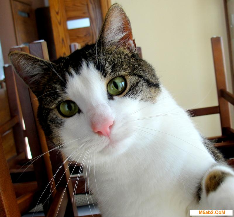 معلومات عن القطط و حياتها قط - صور قطط