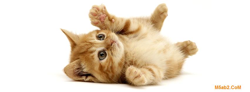 كيف تعرف عمر القطط - ما هو متوسط عمر القط