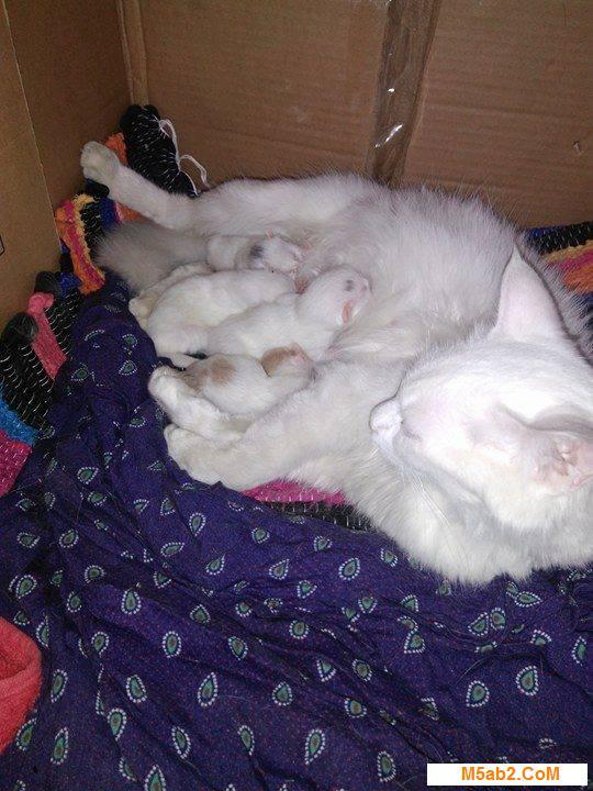 كيف تعرف ان قطتك حامل